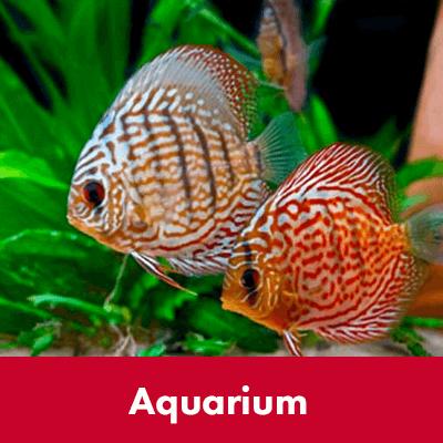 Aquarium - Dierenspeciaalzaak Het Molentje Elst