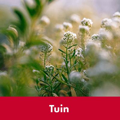 Tuin - Dierenspeciaalzaak Het Molentje Elst