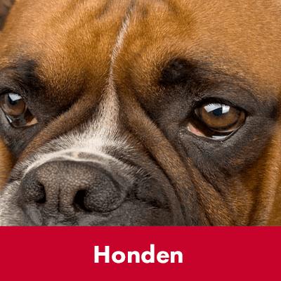 Honden - Dierenspeciaalzaak Het Molentje Elst