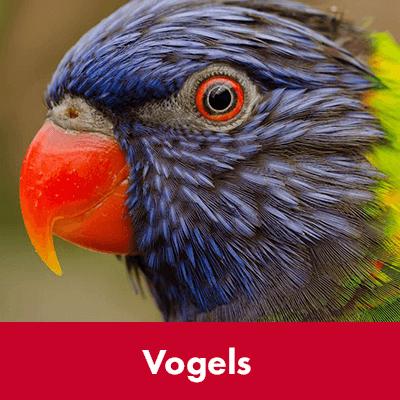 Vogels - Dierenspeciaalzaak Het Molentje Elst