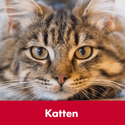 Katten - Dierenspeciaalzaak Het Molentje Elst