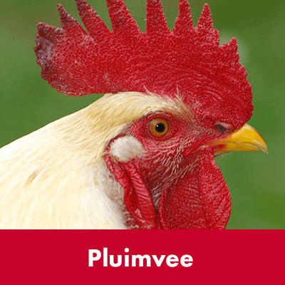 Pluimvee - Dierenspeciaalzaak Het Molentje Elst