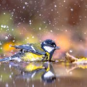 Het Molentje Elst Vogels in de tuin