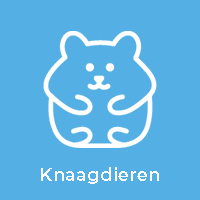 Knaagdieren