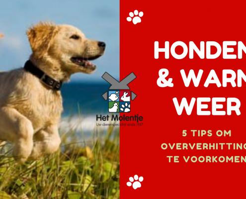 Honden en warm weer: 5 tips!