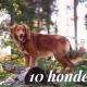 Weetjes over honden